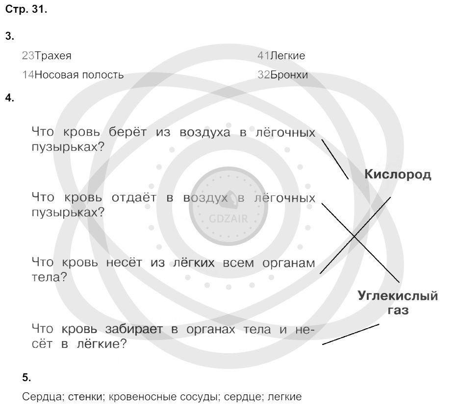 Окружающий мир 3 класс Плешаков А. А. Страницы: 31